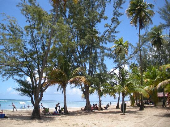 Luquillo Beach: A view through the coconut trees
