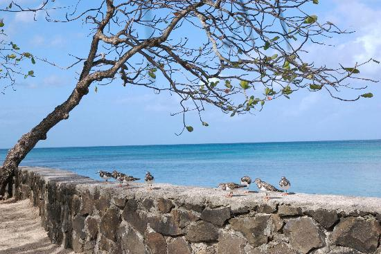 East Winds : Some of the many birds found around the resort