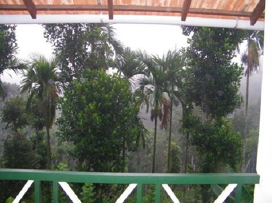 Glenora Homestay: View from Balcony