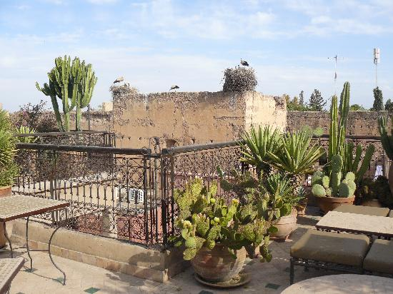 Riad Aladdin: Terrasse mit Storchennest auff der Mauer des Badi Palastes