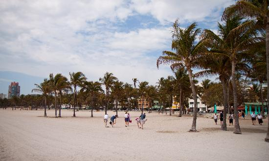 Beacon South Beach Hotel : beach front location