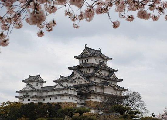 himeji in cherry blossom season