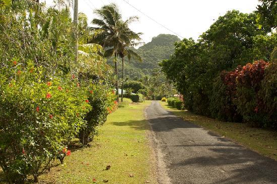 The road leading up to Aroa Kainga.