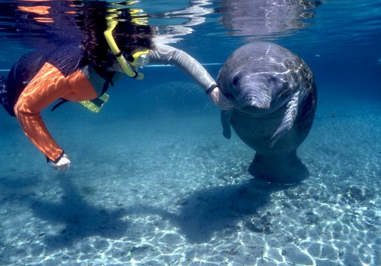 Homosassa Manatee Snorkeling Center