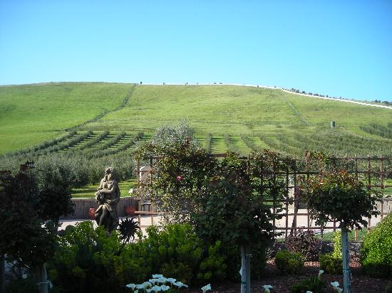 The Purple Orchid Wine Country & Spa : View of hills around the resort.