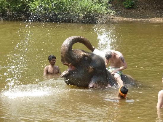 Cansaulim, India: Day with the elephants