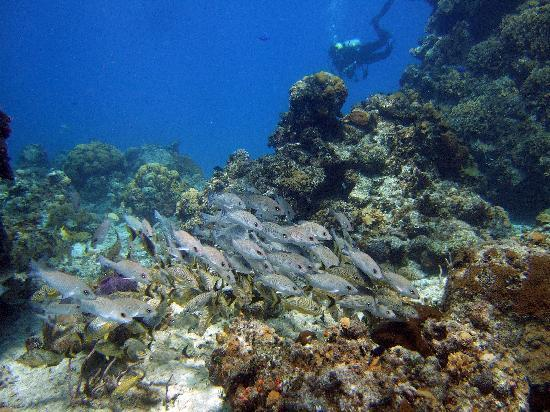 Coral Reef Inn: Columbia Shallow at 40-50ft deep