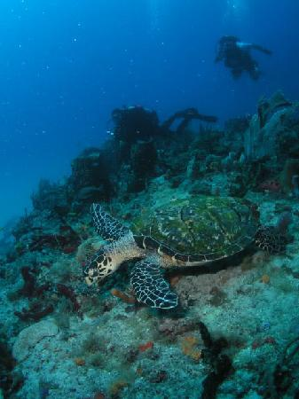 Boynton Beach, FL: turtle