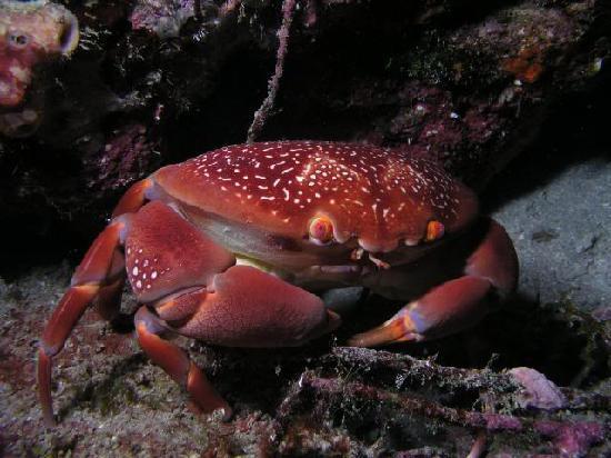 Boynton Beach, FL: crab