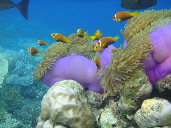 Ihuru Island: reef