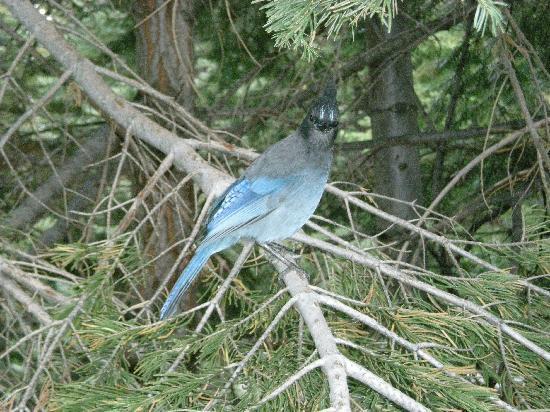 Yosemite Valley: el pájaro azul