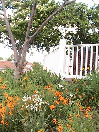 Motel 6 Front Royal, Va: Side Garden