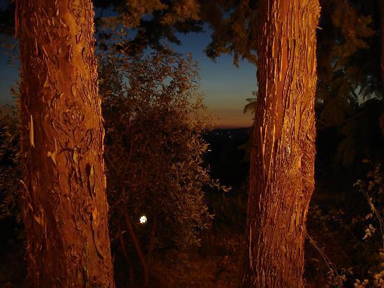 Trattoria Verdiana: vista panoramica dalla terrazza