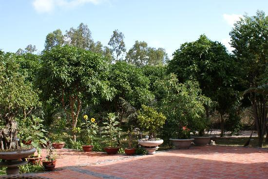 Mangogarden: The wonderful garden