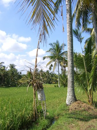 Ubud, Indonesia: A 'tribute' to the Rice God