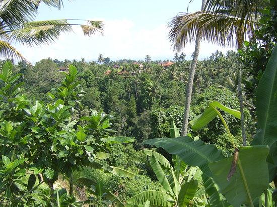Ubud, Indonesia: Looking across the valley