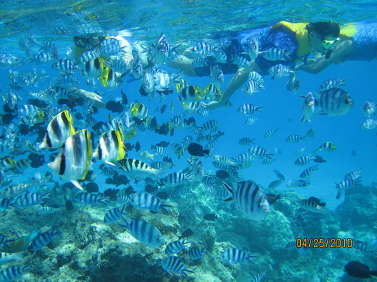 Vaitape, French Polynesia: You are surrounded by fish!