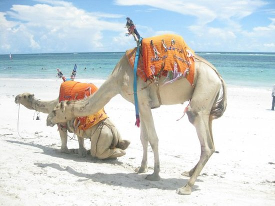 Diani Reef Beach Resort & Spa : Dushi and Nelson