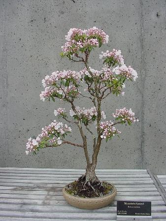 The North Carolina Arboretum: A Bonsai