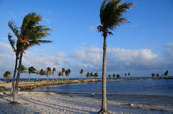 Matheson Hammock Park: Matheson has a lovely tropical look with swim, fish, boating and lovely seascapes.