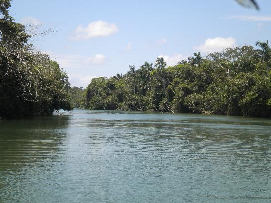 Old Belize River Picture Of Carnival Tours Belize