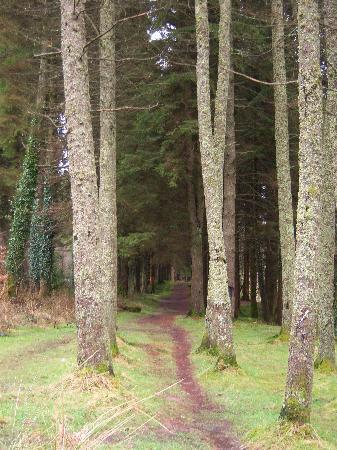 Merthyr Tydfil County, UK: Taf Fechan Forest