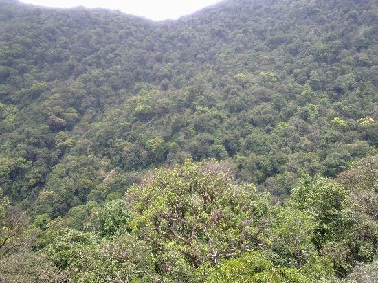 forest of tripura