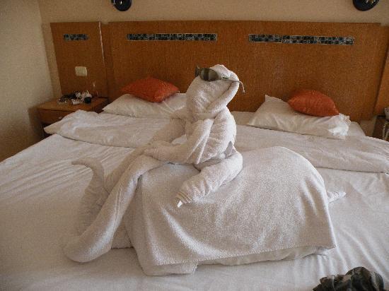 Cyrene Sharm Resort : camel riding