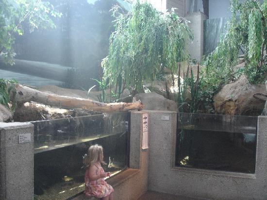 Richmond, VA: Part of the Nature Center aquarium