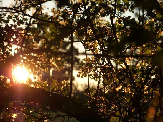 Brickendon Estate: SUNSET THRU THE TREES