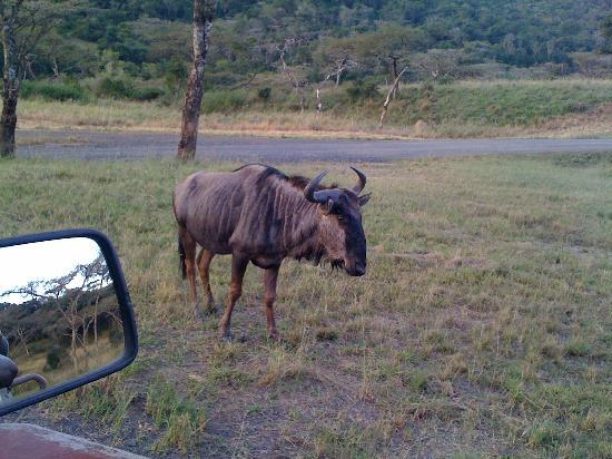 Pietermaritzburg, Afrika Selatan: close up with the animals, but we felt secure