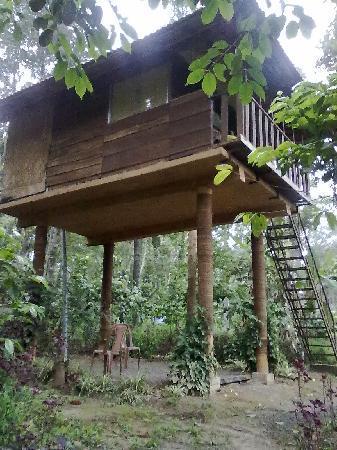 Kolagappara, อินเดีย: Tree house