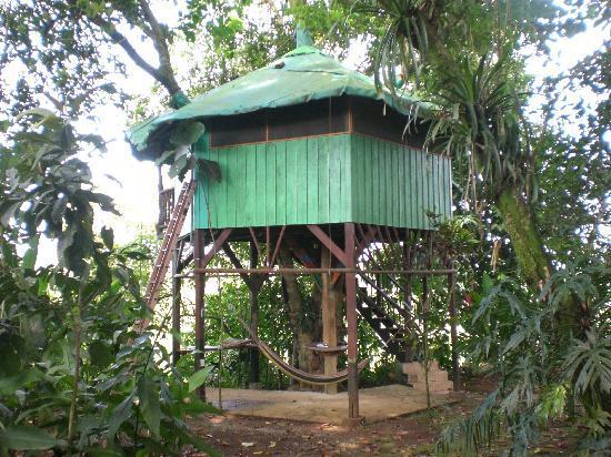 Posada Andrea Cristina: Tree House