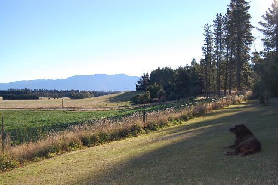 Gunyah Country Lodge: 山を背景にしたラブラドール犬
