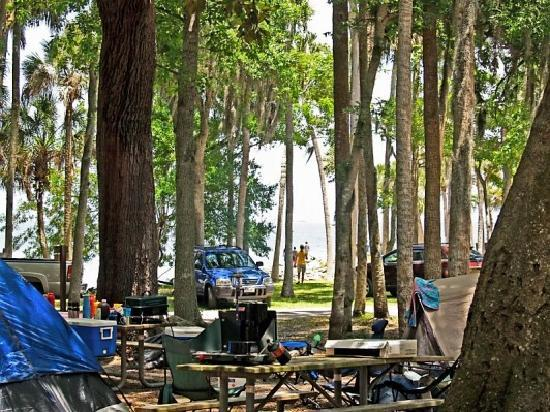 Manatee Hammock Campground: More campsite tent area