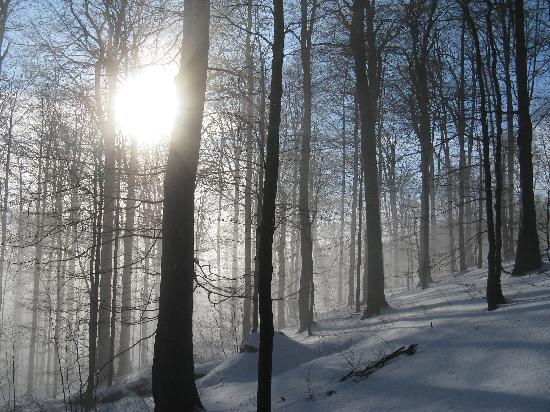 Primeval Beech Forests of the Carpathians, Ukraine: winter sun in Svydovets primeval forest (Ukraine)