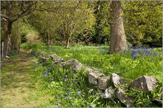 Σέβενοουκς, UK: The edge of the Primrose lawn
