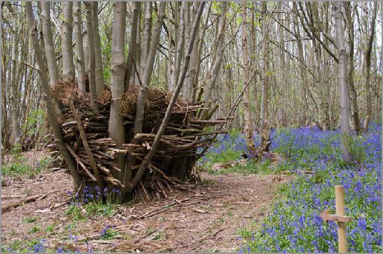 Σέβενοουκς, UK: A den in the bluebell woods