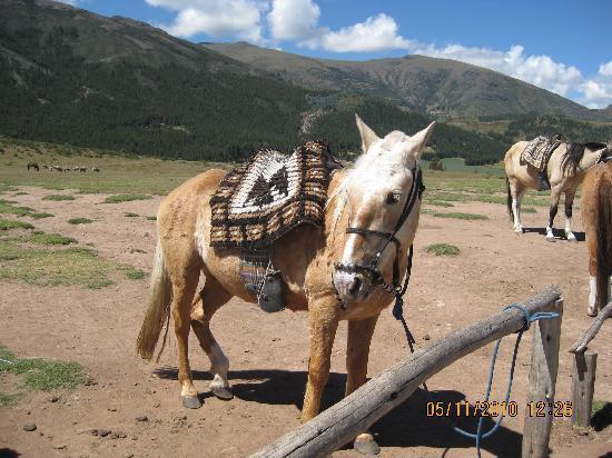 Ayacucho, Perú: horses