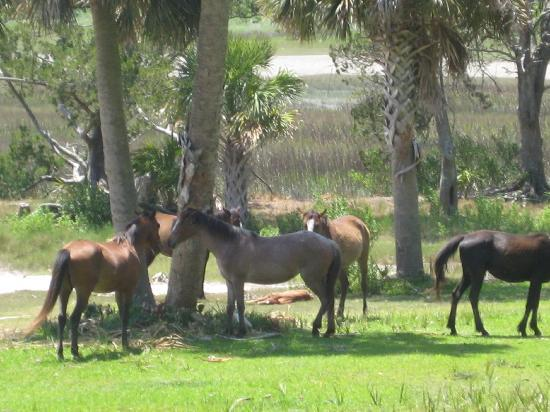 Plum Orchard Mansion: Wild horses at Dungeness Ruins
