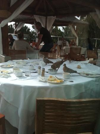 Melia Fuerteventura: Ungebetene Gäste