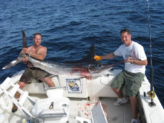 140 lb striped marlin picture of pisces sportfishing for Pisces fishing cabo