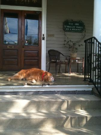1896 O'Malley House Bed and Breakfast: Cody, the Dog of the House