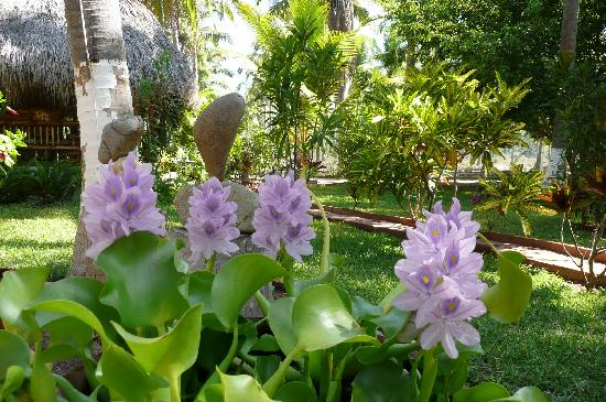 Villa Don Manuel: Natuural Lillies and Rocks - Like the contrast