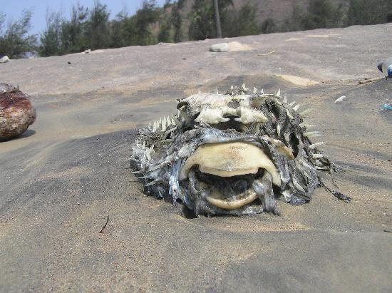 Punami Rishikonda Wildlife On The Beach