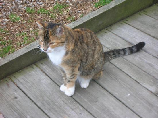 Brookside Cabins: The Brookside Cat