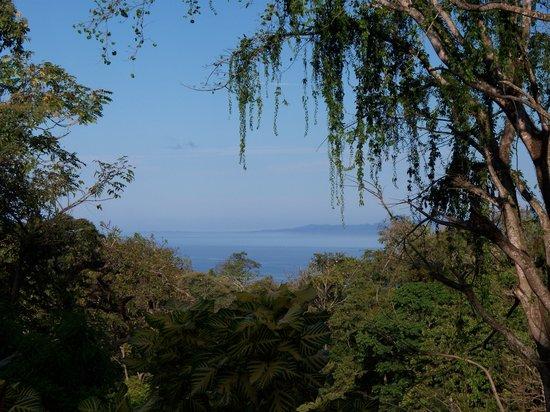 Tabulia Tree Hotel & Villas: una vista muy buena