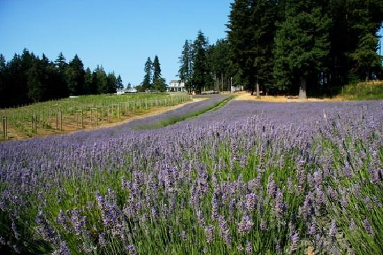 Damali Lavender Farm and B&B Picture