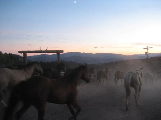 Black Mountain Ranch: Horses