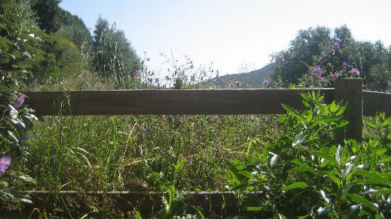 Littariccia : vue jardin, vue chradon!!!!!!